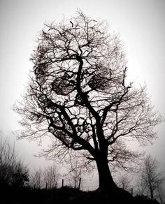 Skull tree tattoo idea