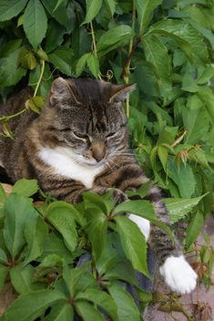 Cats love chewing on plants and herbs. This is natural -- maybe even good for them -- but some common varieties of flora are harmful. Research every plant in your home and garden to see if it's cat-safe, and call a veterinarian immediately if your cat eats poisonous plants.