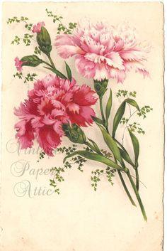 Pink Carnations Vintage French Postcard by VintagePaperAttic