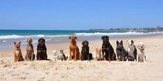 Pack of dogs play on beach to Pharrell Williams Happy (VIDEO)