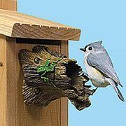 Guide to size of bird house for different species
