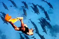 Dolphin House snorkeling trip in Marsa Alam http://www.shaspo.com/marsa-alam-excursions-and-holidays