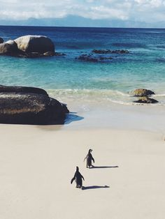 Waddlin' out to sea at Boulders Penguin Colony in #CapeTown. Join the adventure on {graymalin.com/lifestyle}