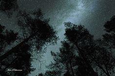 Yöllinen metsä, Forest in night #finland #night #yö #star