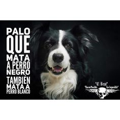 Stick that kills a black dog also kills a white dog. elbrujo2015 #elbrujo.net #Kimbiza #brujeria #Amor #Dinero #Salud #Suerte #palo mayombe #palo #Poder #Frases #elbrujo #brujo #magia #mensajedeldia #MaestroEspiritual #sabiduria #reflexion #ensenanzas #espiritualidad #withcraft #love #money #luck #power #fraces #the warlock #warlock #magic #messageoftheday #spiritual master #refleccion