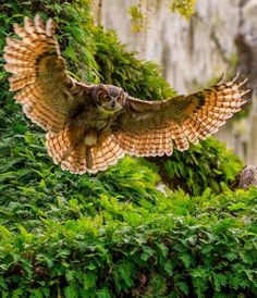 National geographic treat each year. Lechuza Tattoo, Names Of Birds, Philippine Eagle, National Geographic Photography, Owl Wings, Eagle Pose, Owl Photos, Mythical Creatures Art, Great Horned Owl