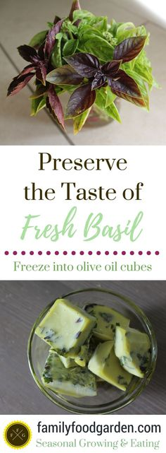 How to preserve basil by freezing it. Freezing fresh basil into olive oil cubes helps to retain that wonderful fresh basil taste.