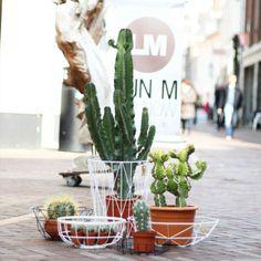 Cactus in store. Love these planters! LijnM.com