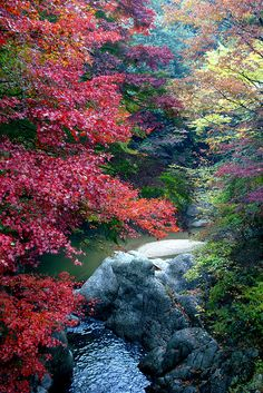 Autumn In Vibrant Colors