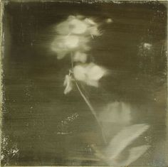 ☽ Dream Within a Dream ☾ Misty Blurred Art & Fashion Photography - Lance Morrison