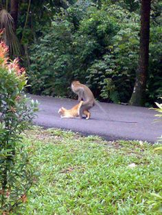 Monkeycat in progress