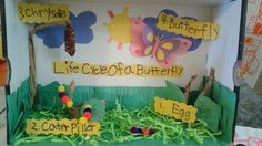Life cycle of a butterfly  diorama...kindergarten project!