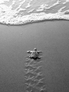 Turtle rushing the finish line