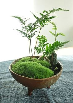 making this moss garden!