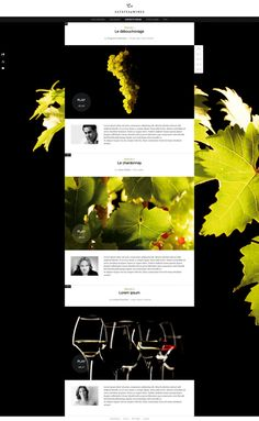 Julien Bailly /// Estates & Wines