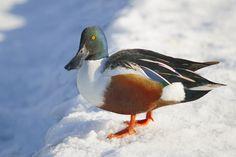 cold duck by René Villela on 500px