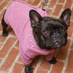 Dog Clothing & Accessories To Make: {Free Patterns}