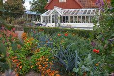 Boäng: Hur samodlar man grönsaker och blommor?
