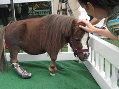 Thumbelina the smallest horse Animals And Pets, Baby Animals, Cute Animals, Aide Handicap, Miniature Ponies, Rare Horses, Animal Magic, Majestic Horse, Equine Art