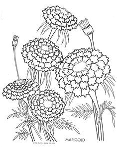 marigold adult coloringcoloring bookcolouringembroidery