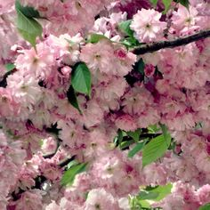 Spring Decor Flowers Photograph Spring Cherry by LovesParisStudio, $35.00