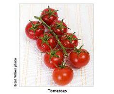 Burke's Backyard > Fact Sheets > 2UE tomato growing tips