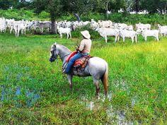 Pantaneiro horse. Cavalo pantaneiro. The original Iberian horses arrived in the…