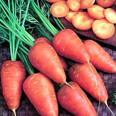 Carrot Early Scarlet Horn - Seeds