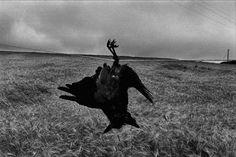 Diptyque's Crossing....: Camera obscura... Josef Koudelka