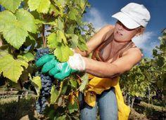 @diariodelvino #vinoyfotografía #winelover #amantedelvino #Weinliebhaber #megustaelvino #wine #wein #vino #vin #vi #vinho #ardoa