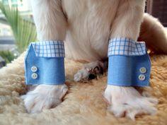 Blue Checkered Dog Shirt Cuffs by furkidscloset on Etsy, $21.00