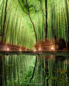Arishiyama in Kyoto, Japan. 15 Truly Astounding Places To Visit In Japan. japan, 15 Truly Astounding Places To Visit In Japan Photo Japon, Japan Photo, Japanese Landscape, Green Landscape, Japanese Nature, Japanese Gardens, Forest Photography, Canon Photography, Photography Photos