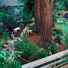 Dog friendly garden ideas: Think like a canine (© Thomas J. Story) I really like the idea of creating running and exploring paths for dogs. Fence Landscaping, Backyard Fences, Garden Fencing, Backyard Projects, Backyard Ideas, Garden Ideas, Backyard Play, Backyard Designs, Large Backyard