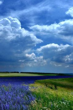 A field of green & blue.
