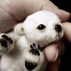"According to the caption: Usually listed as ""brand new baby polar bear"" or ""cute polar bear. The truth: It's not a real bear. It's a stuffed bear that you can buy a pattern to make on Etsy. Found in Baby polar bear. Cute Baby Animals, Animals And Pets, Funny Animals, Wild Animals, Newborn Animals, Animals Planet, Animals Images, Arctic Animals, Animal Memes"