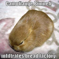 Bunny loaf! #rabbit #rabbits #cuteanimals #cuteanimal #bunny #bunnies #pet #pets