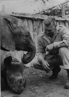 Clark Gable during the filming of 'Mogambo' at the Carr-Hartley Game Ranch in Rumuruti, Kenya, circa 1953 Elephant Trunk, Baby Elephant, Baby Rhino, Hollywood Images, Classic Hollywood, Mutiny On The Bounty, It Happened One Night, William Clark, Rhett Butler