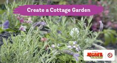 Tui Garden | Cottage Garden Guide