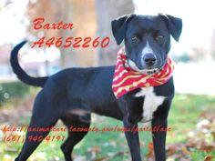 www.PetHarbor.com pet:LACO3.A4652260