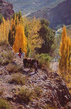 Cabalgata por el valle de Uco, Mendoza, Argentina