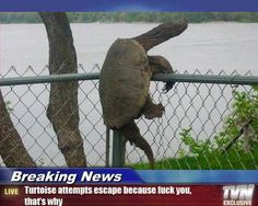 aww I hope the turtles alright