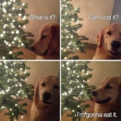 Trendy Ideas For Funny Christmas Memes Hilarious Animal Pictures I Love Dogs, Puppy Love, Cute Dogs, Awesome Dogs, Funny Dogs, Funny Animals, Cute Animals, Funny Memes, Dog Memes