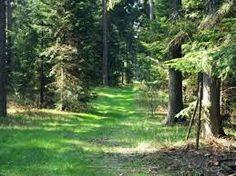 Znalezione obrazy dla zapytania las polski