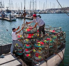 Dungeness crab season competing crabbers. (John Green/Bay Area News