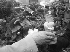 plantas y manos
