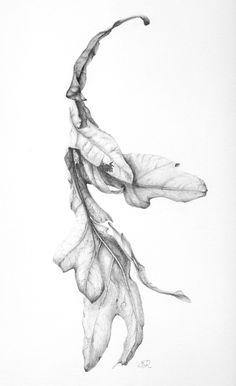 Oak Leaf, winter debris in mygarden