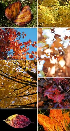Fall Herfst