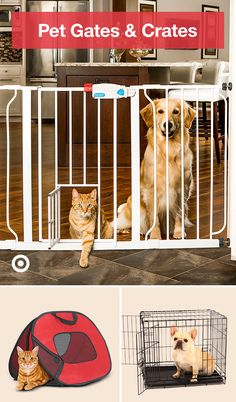 Keep your kitty or puppy safe & out of trouble with metal dog gates pet supplies & essentials. Keep your kitty or puppy safe & out of trouble with metal dog gates pet supplies & essentials. Cute Funny Animals, Cute Baby Animals, Animals And Pets, Cute Cats, Bunny Cages, Dog Items, Dog Crate, Guinea Pigs, Cute Puppies