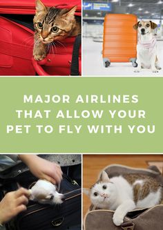 Sometimes air travel with an animal is necessary. So we researched which major U.S. airlines allow your pet in-cabin with you, a safer option for them and a less anxiety-producing choice for you.