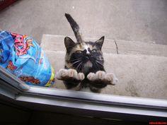 My Aunts Cat - http://cutecatshq.com/cats/my-aunts-cat/